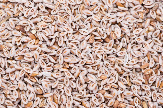 دانه های اسفرزه Psyllium seeds