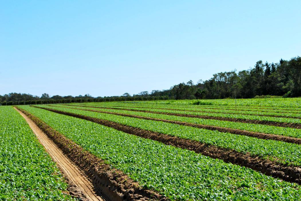 پوسته اسفرزه برای پیشگیری از فرسایش خاک